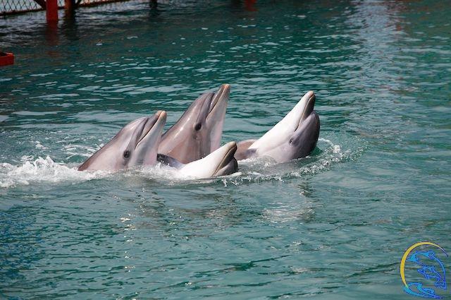 Дельфинарий в г. Анапа, п. Большой Утриш