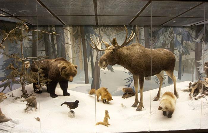 Экспозиция в музее Дарвина